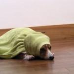 冬の寒さ対策~体を暖める方法やグッズ、簡単豆知識を紹介